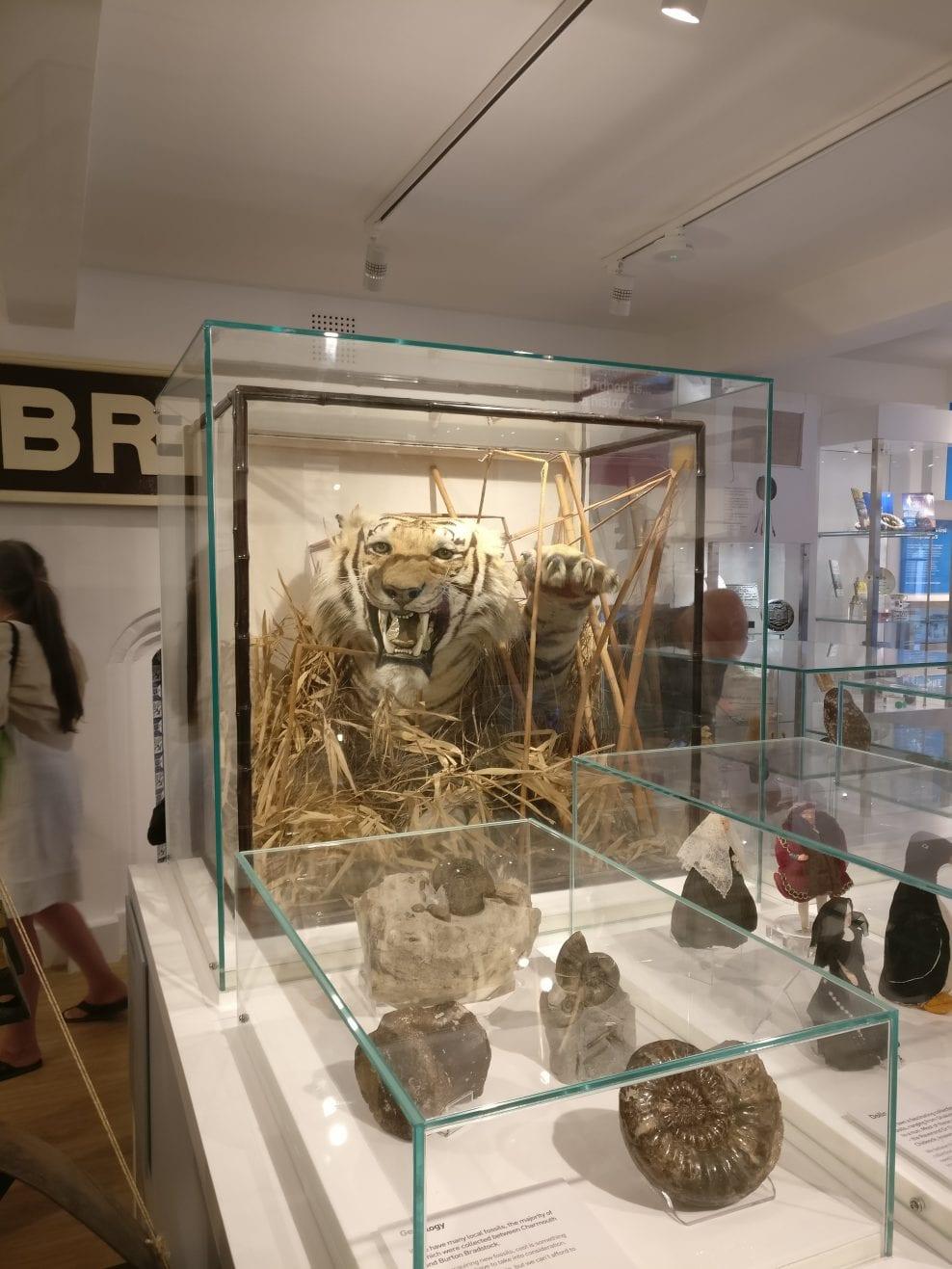 Bridport Museum Redevelopment