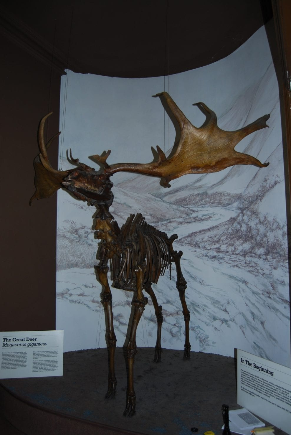 Manx Giant Deer before conservation and installation